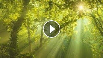 Beautiful Relaxing Music 24/7: Study Music, Sleep Music