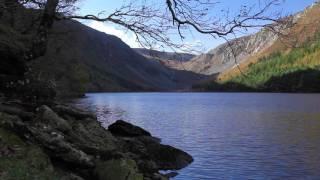 4K Tropical Rain & Relaxing Nature Sounds - Ultra HD Nature Video