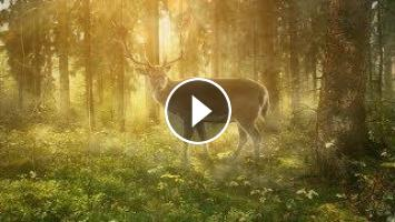 Relaxing Celtic Music: Beautiful Relaxing Music, Sleep Music